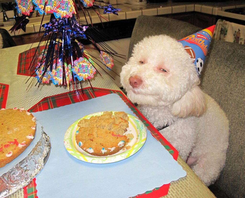 north-korea-is-using-riley-the-stoned-birthday-dog-to-illustrate-american-excess-932-1436294091