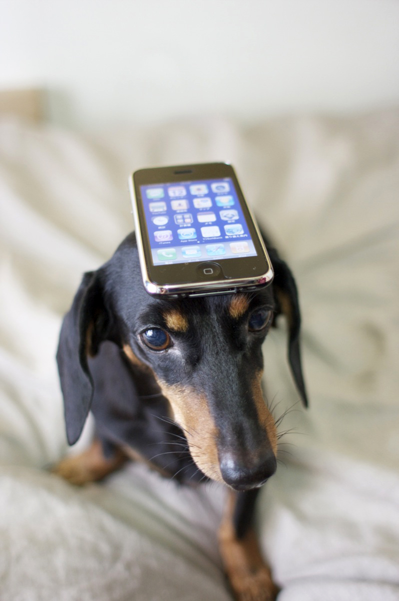 dog-with-iphone-by-nao-cha